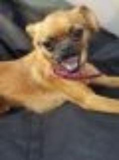 Lilo Pug Dog