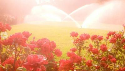 Commercial Irrigation In Nj