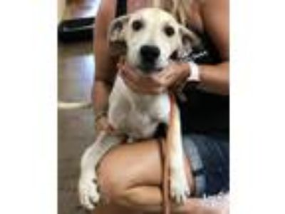 Adopt France a Tan/Yellow/Fawn Shepherd (Unknown Type) / Mixed dog in