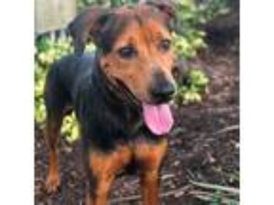 Adopt Margaery a Black Shepherd (Unknown Type) dog in Gainesville, FL (25860281)