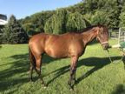 2014 Throughbred Mare