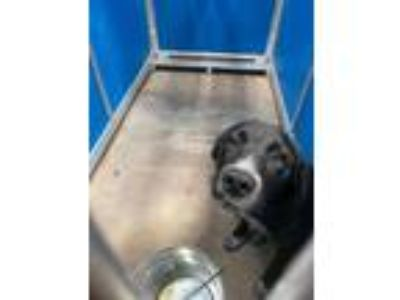 Adopt Cage 8 July 11 a Border Collie