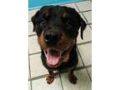 Adopt Lowell a Black Mixed Breed (Large) / Mixed dog in Fort Wayne