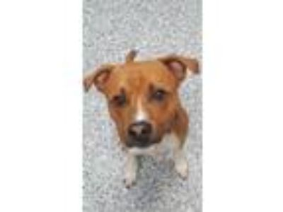 Adopt Corbin a Terrier (Unknown Type, Small) / Mixed dog in Angola