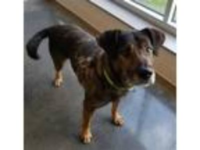 Adopt Ernie a Shepherd (Unknown Type) / Mixed dog in Pittsburgh, PA (25830717)