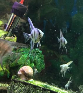 Craigslist - Pet Fish for Sale Classifieds in Hinesville, Georgia