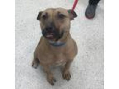 Adopt Churro a Brown/Chocolate Mixed Breed (Medium) dog in Jacksonville