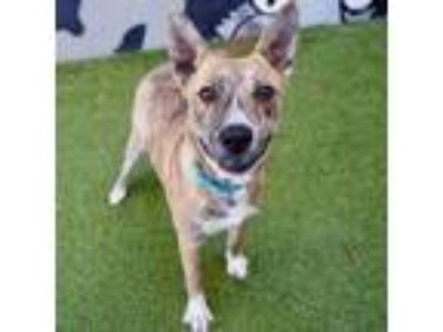 Adopt Henrietta a German Shepherd Dog