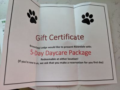 5 day daycare package Brown dog lodge