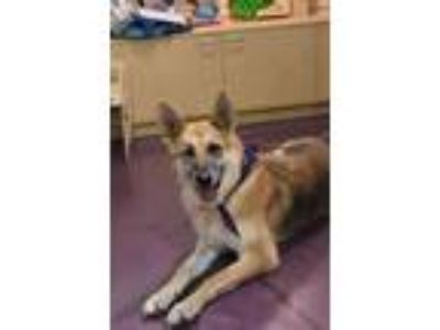 Adopt Greta a German Shepherd Dog