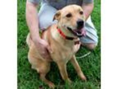 Adopt Ellie Mae, Loving & Affectionate! a Labrador Retriever