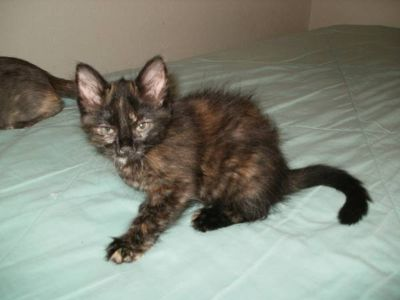 Kittens need a loving home (League City or Surrounding)