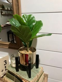Cute plant with stand