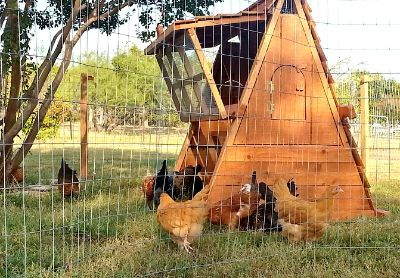 ON SALE- Beautiful Chicken Coops For Your Hens -PORTABLE AND EASILY WINTERIZED
