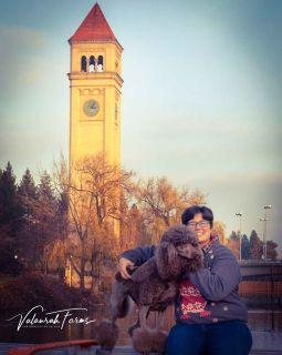 Puppy Spokane Valley Classifieds Clazorg