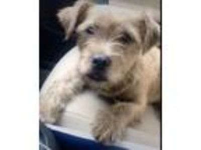 Adopt Wilburt a Terrier, Mixed Breed