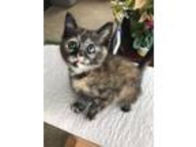Adopt London a Domestic Medium Hair