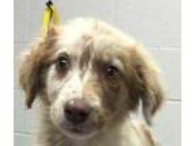Adopt Eucla a Tan/Yellow/Fawn Mixed Breed (Medium) / Mixed dog in Dubuque