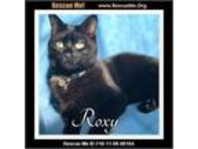 Adopt Roxy a Black (Mostly) Domestic Shorthair (short coat) cat in White Plains