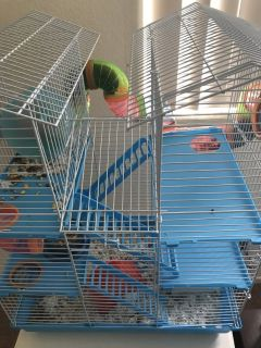 Two hamsters with cages food and bedding