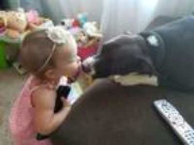 Adopt Eleos - FOSTER NEEDED! a Pit Bull Terrier, American Staffordshire Terrier