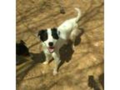 Adopt Dixie a Border Collie