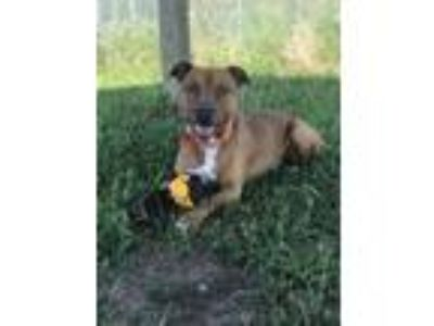 Adopt Nemon a Mixed Breed