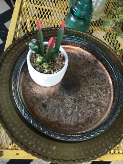 Small cactus plant with two metal trays sold together