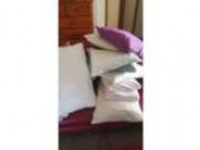 Bulk lot of physio pillows