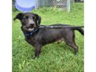 Adopt Froddo a Black Terrier (Unknown Type, Medium) dog in Northbrook