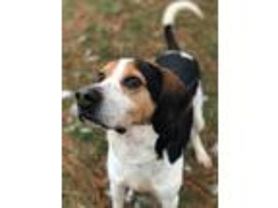 Adopt Ray a Coonhound