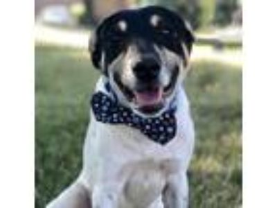 Adopt Harold a White Terrier (Unknown Type, Small) / Mixed dog in Itasca
