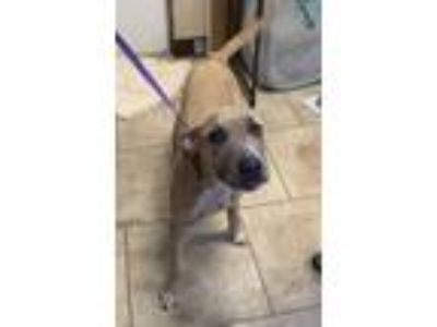 Adopt Eugene a Tan/Yellow/Fawn Mixed Breed (Large) / Mixed dog in St.