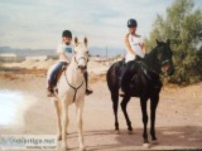 Horseback Riding Lessons and Training