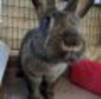 Cardi Bunny Rabbit Rabbit