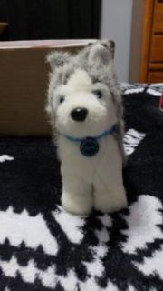 American Girl Doll Pepper Husky with collar