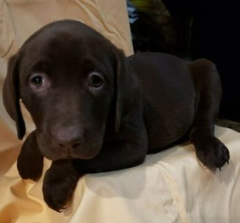 Craigslist Animals And Pets For Adoption Classifieds In Great Bend