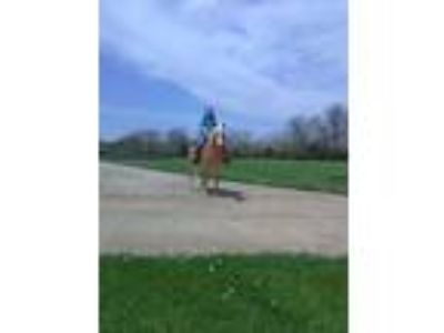 2004 AHR mare rides drives