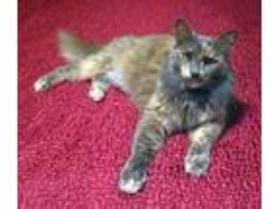 Adopt Zena a Domestic Shorthair / Mixed cat in St Helens, OR (23305428)