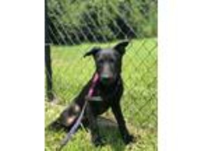 Adopt ALICE a Black Shepherd (Unknown Type) / Mixed dog in Palm Coast