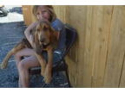 Craigslist - Animals and Pets for Adoption Classified Ads in