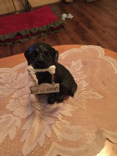 Small dog welcome