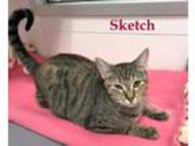 Adopt Sketch a Domestic Shorthair / Mixed (short coat) cat in Stover