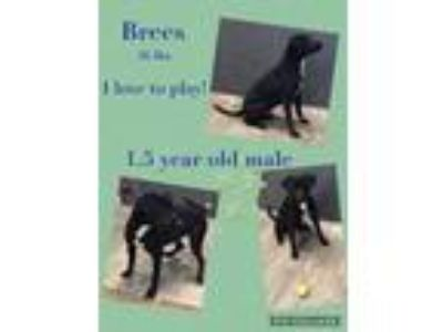 Adopt Brees a Black Mixed Breed (Medium) / Mixed dog in St.