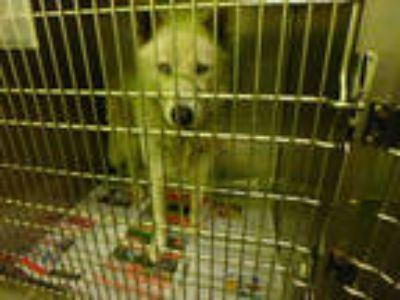 Adopt ARCTICA a White Mixed Breed (Medium) / Mixed dog in Los Angeles