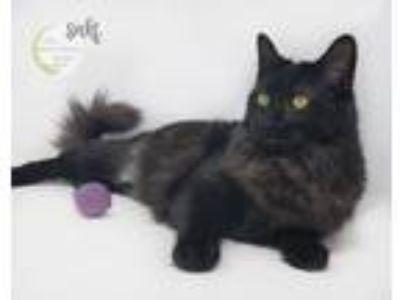 Adopt Baby Saki a Tortoiseshell Domestic Longhair / Mixed (long coat) cat in