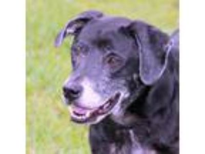 Adopt Dakota a Black Retriever (Unknown Type) / Mixed dog in Loxahatchee