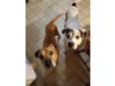 Adopt Patches and Mirra a Shepherd