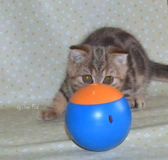 Kittens - Parker Classifieds - Claz org