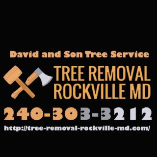 Tree Removal Rockville MD